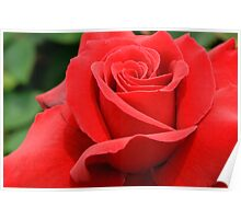 Red Velvet Rose Poster