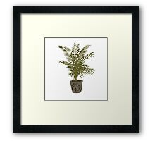 Houseplant With a Cool Pot Framed Print
