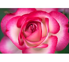 California Dreamin' Rose Photographic Print