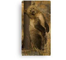 Grizzly Cub-Signed-#5174 Canvas Print