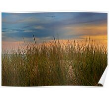 Beach Grass on the Dune during Sunset by Holland Michigan Poster