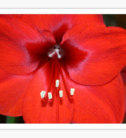 Is this the Way to Amaryllis? Sticker
