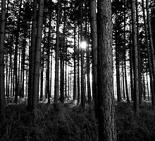 Dark forest by Steven  Van Gucht