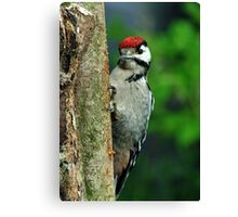Juvenile ,Great Spotted Woodpecker Canvas Print