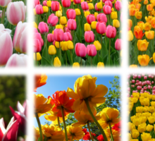 Tulips Montage 1 Sticker