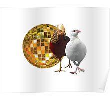 Disco Birds Poster