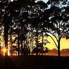 Dawn at Mengha in nor west Tasmania , Australia by phillip wise