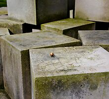 A nut on the stone by Rafiul Alam