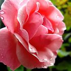 pink after a rain by LoreLeft27