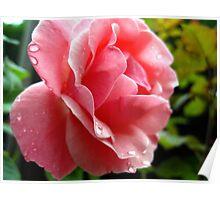 pink after a rain Poster
