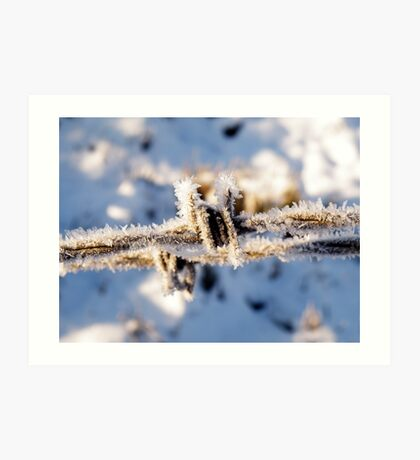 Frosty Barbed Wire Art Print