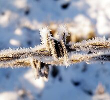 Frosty Barbed Wire by Evelyn Flint
