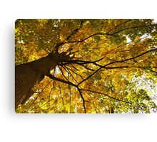 Golden Umbrella Canvas Print