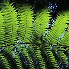 Mt. Tomah Fern by Sally Haldane