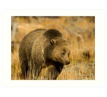 Grizzly Sow-Signed-#5216 Art Print