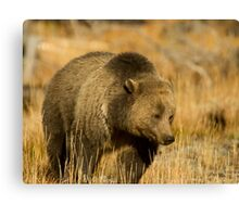 Grizzly Sow-Signed-#5216 Canvas Print