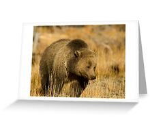 Grizzly Sow-Signed-#5216 Greeting Card