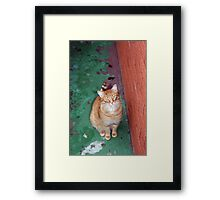 My best friend and favourite model........ Framed Print