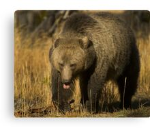 Grizzly Sow-Signed-#5230 Canvas Print