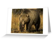 Grizzly Sow-Signed-#5230 Greeting Card