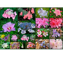 Floral Collage 2 Photographic Print