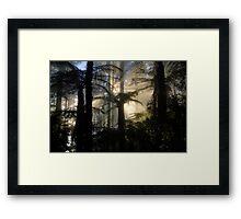 Through the Ferns Framed Print