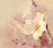Pink Blossom by Andre Sintenie
