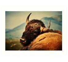 Bison 12 Art Print