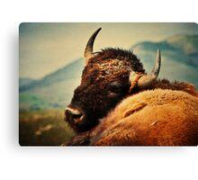 Bison 12 Canvas Print