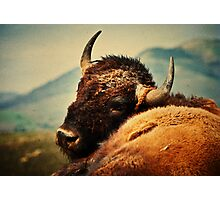 Bison 12 Photographic Print