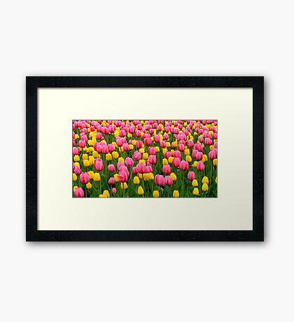 Tulips 1 Framed Print