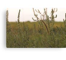 Prairie. Canvas Print
