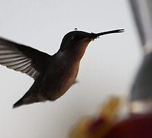 Pretty Lil HummingBird # 3 by gypsykatz