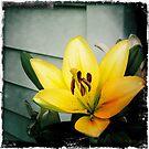 Hip Lily by KBritt