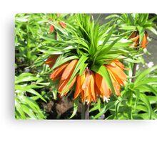 Sunkissed Crown Imperial - Keukenhof Gardens Canvas Print