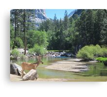 Mirror Lake and the Buck Canvas Print