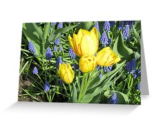 Sunkissed Yellow Tulips and Blue Muscari Greeting Card