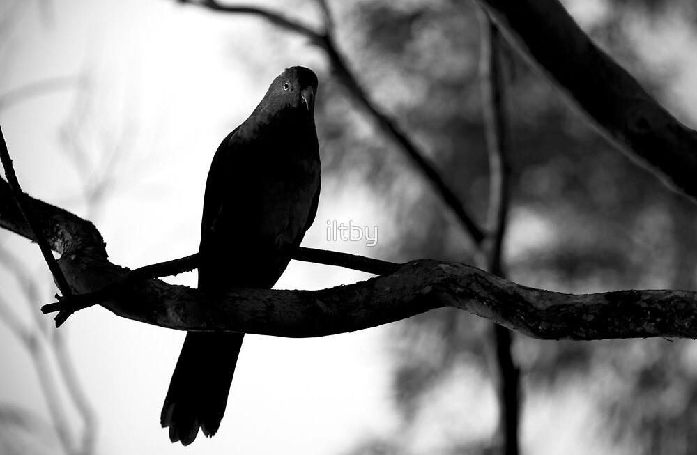 Enveloped In Black by Josie Eldred