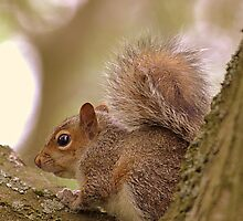 Squirrel by Andrew Cooper