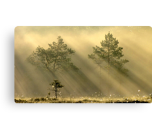 16.6.2012: Bird's Morning Canvas Print