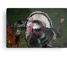 Turkeys! Metal Print