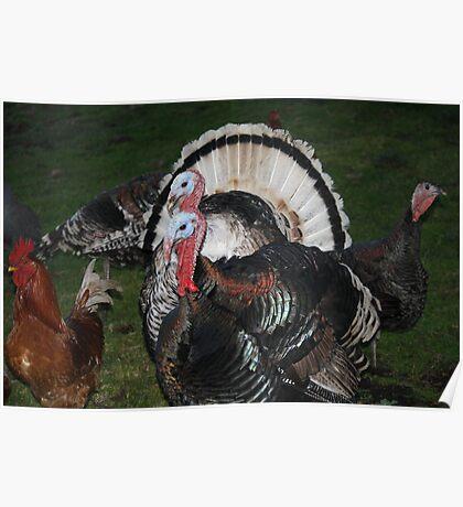 Turkeys! Poster