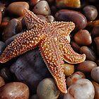 Fallen Star by Michael Carter