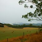 On the road to Walhalla by Michael Matthews