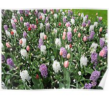 Pretty Pastels - Flowering Bulbs in the Keukenhof Poster