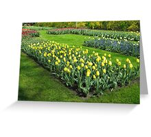Beds of Tulips - Keukenhof Gardens Greeting Card