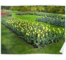 Beds of Tulips - Keukenhof Gardens Poster