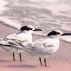 Romantic Terns by Ticker