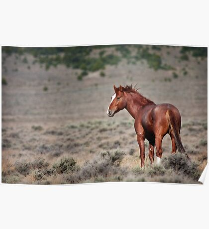 Cherry Creek Mustang Poster