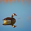 Lake Reflection by John  De Bord Photography